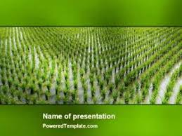 rice paddies powerpoint template by poweredtemplate com youtube