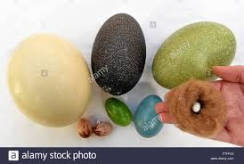 walsrode germany 17th mar 2016 eggs of different birds being