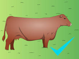 how to hand seed cattle pastures 3 steps with pictures