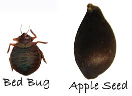 How To Avoid Bed Bugs How To Avoid Bed Bugs Avoid Bed Bug Bites When Travelling Eco