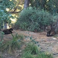 87 best disneyland cats images on disneyland cats