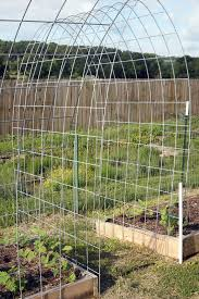 cattle panel arched trellis bend a long hog or cattle panel and
