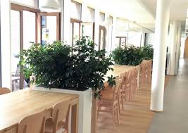 plants for offices best office plants indoor plants pinterest