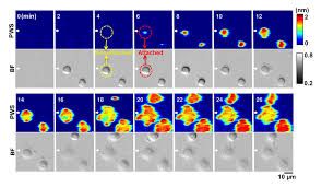 new label free microscope enables dynamic high res imaging of