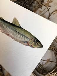 original oil painting of a smelt fish art nautical art beach gallery photo gallery photo gallery photo gallery photo gallery photo