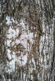 lessons from trees speed river journal