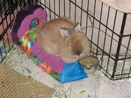 Rabbit Beds Cute Rabbit Furniture Beds Etc Binkybunny Com House Rabbit