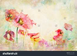 watercolor flowers wallpaper illustration poppy multicolor stock