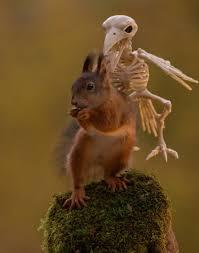 photos how squirrels celebrate halloween i am bored