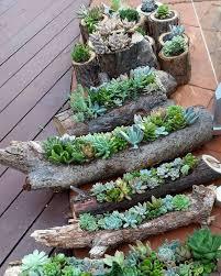 download succulent pot ideas solidaria garden