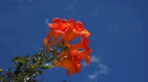 free images blossom sky leaf petal bloom mediterranean red
