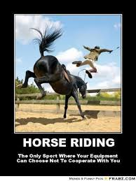 Horse Riding Meme - 241 best horse memes images on pinterest funny horses