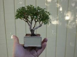 shortwaves tiny trees mini makers
