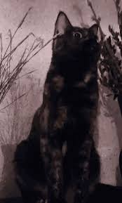 Sassy Cat Meme - sassy cat meme gifs tenor
