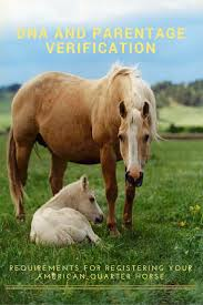 Horse With American Flag 59 Best Horse Breeding Images On Pinterest Horse Breeds Horse