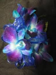 blue orchid corsage hartland flowers inc dendrobium orchid corsage hartland mi 48353