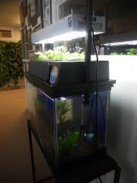 our new aquaponics system