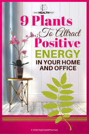 9 plants to attract positive energy in your home and office