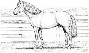 horse stands at fence coloring page free printable coloring pages
