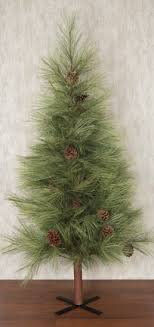 needle pine tree 5ft