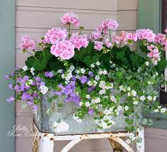 43 best plants images on pinterest plants flowers and pretty