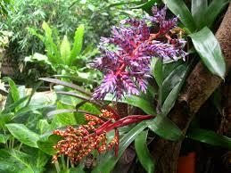 Adaptations Of Tropical Rainforest Plants - plants and animals in the tropical rainforest home decorating