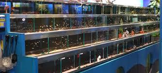 aquarium and ornamental fish business in dhaka