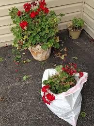Plant Flower Garden - 2398 best garden landscape plants flowers porch outdoor living