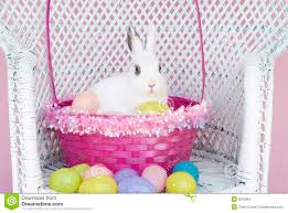 rabbit easter basket white rabbit in easter basket with easter eggs stock images