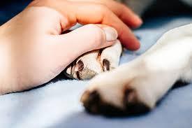 pet euthanasia home euthanasia welcomewelcome