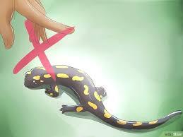 salamander k che kuche salamander bildtitel care for salamanders step 10 salamander
