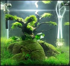 Plants For Aquascaping 20 Best Aquariums Images On Pinterest Aquarium Ideas Planted