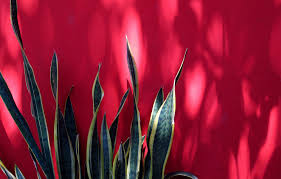 low light plants for bedroom the 10 best plants for apartment dwellers u2013 orangewood park apartments