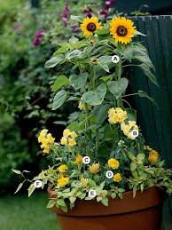 Plant Combination Ideas For Container Gardens - great containers for gardening gardens sunflowers and dwarf