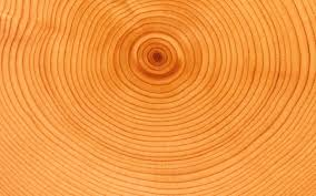 tree rings pictures images Tree ring analysis for age dating and climate studies jpg
