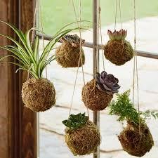 100 best kokedama string hanging plants images on pinterest