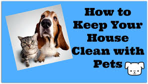 how to keep your house clean with pets vacuum your dog youtube