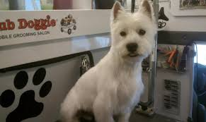 images of westie hair cuts club doggie mobile grooming salon before and after photo gallery