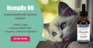 Colorado Traveling With Cats images Cannabis 101 cbd for your cat png