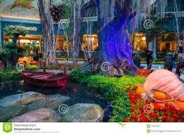 bellagio hotel conservatory u0026 botanical gardens editorial photo