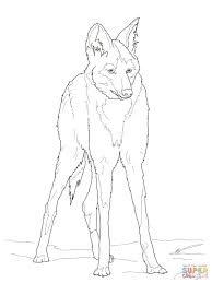 reddish maned wolf coloring page free printable coloring pages