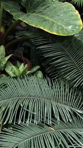 images of palm fronds sc