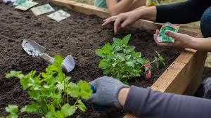 Garden Planning 101 My Mother How To Start A Home Vegetable Garden Benefits U0026 Saving Money
