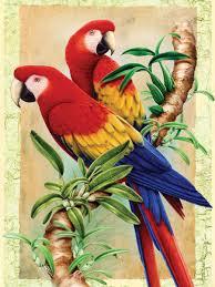 pin by maría inés pinardi on bird art pinterest scarlet