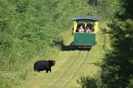 Michigan wildlife tours images Here are 6 awesome train day trips in michigan jpg