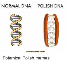 Dna Meme - normal dna polish dna polemical polish memes polemical polish memes