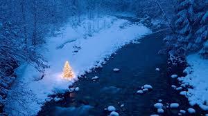 christmas tree hd 456432 walldevil