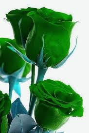 green roses 202 best green roses images on green green