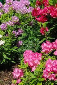acid loving plants what type of plants grow in acidic soil