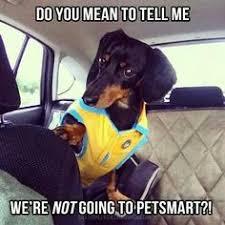 Wiener Dog Meme - funny dachshund petsmart meme dogs pinterest funny dachshund
